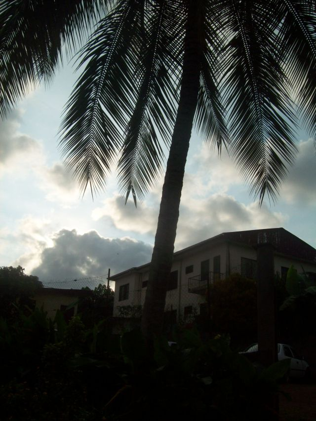 Our coconut tree