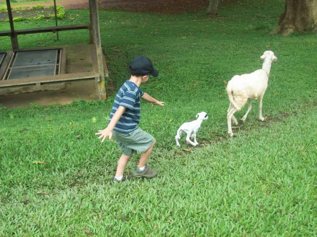 Jonah the sheep herder