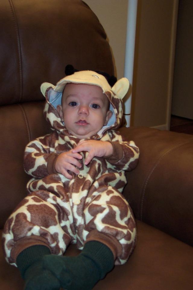 Joshua giraffe