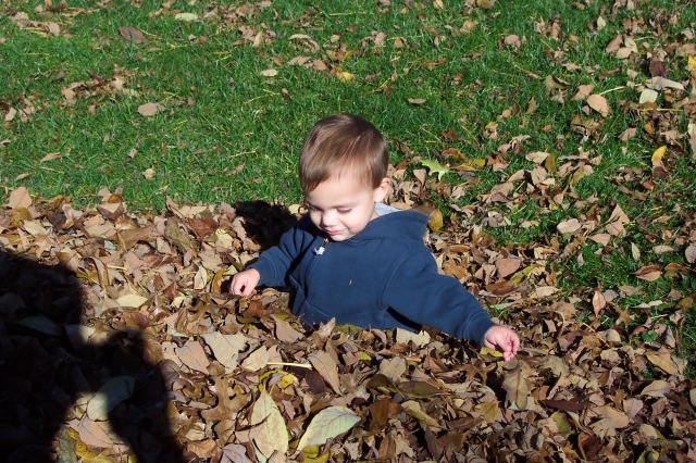 Joshua 2004 in leaves